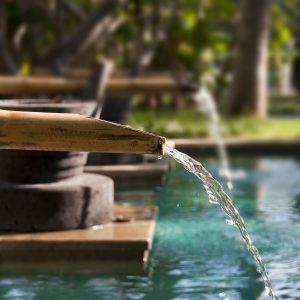 Détail piscine biologique