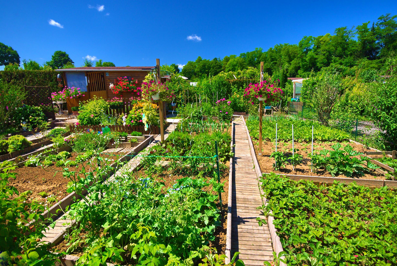 Comment r ussir cultiver son jardin potager en s 39 amusant for Creer mon jardin