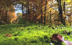 fertilité d'un sol forestier