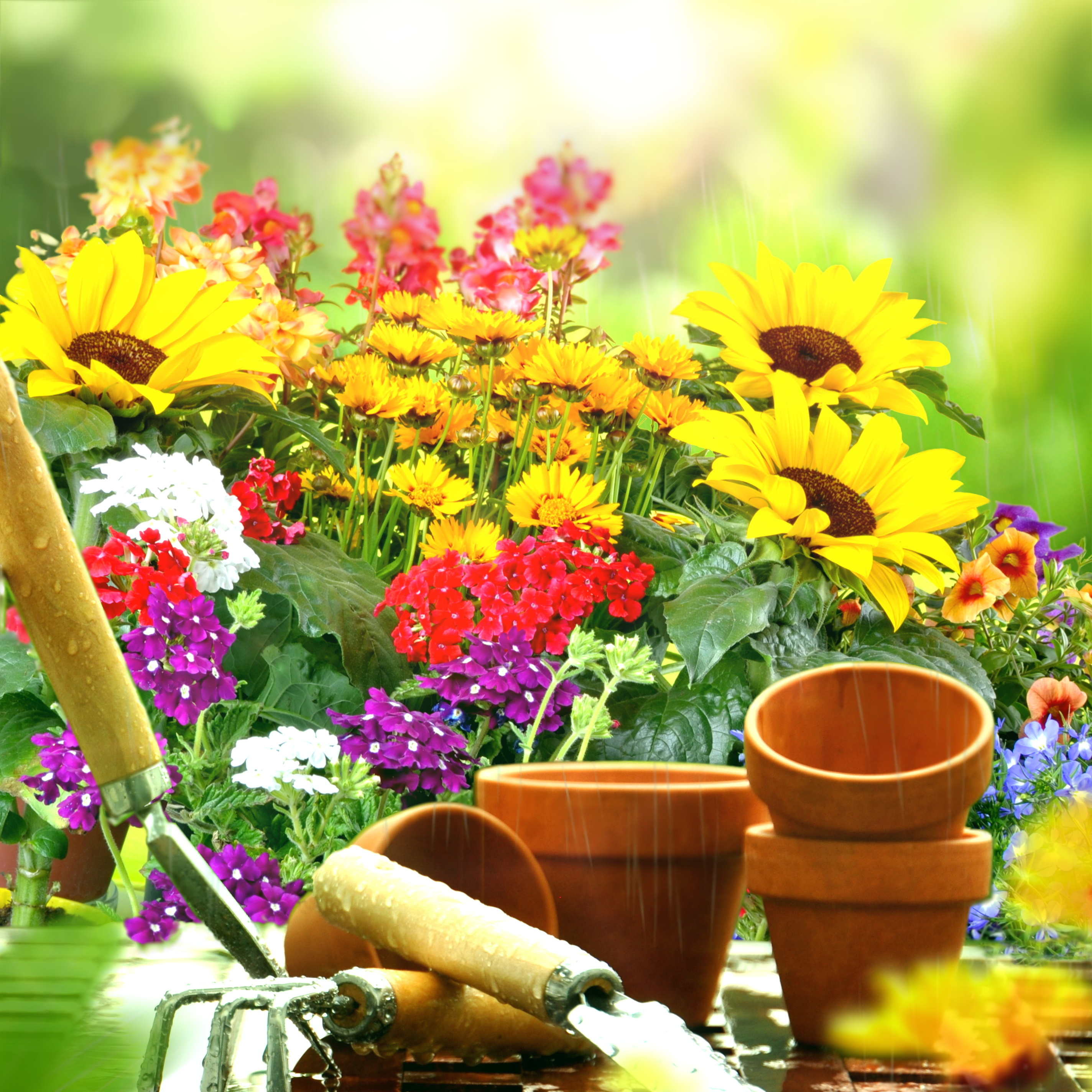 Plantation d\'automne : les secrets pour réveiller son jardin paysager