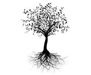 La cendre de bois apposée sur le tronc de l'arbre prévient des maladies.