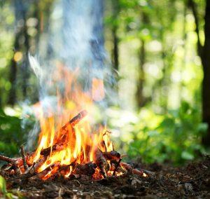 La cendre de bois vous aidera à obtenir de bons rendements dans vos plantations