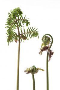 Les plantes pour kokedamas