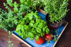 Que planter dans un mini potager ?