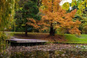 Un arbe orange en automne au pied d'un étang