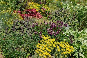 Fleurs colorées dans un jardin sauvage