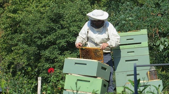 apiculteur et ses ruches