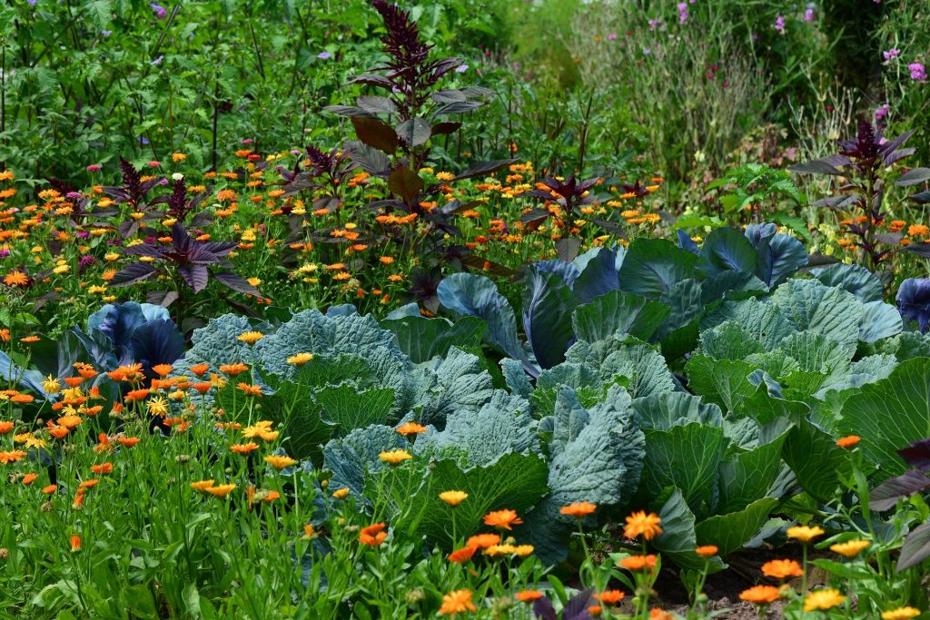 Jardin potager qui allie cultures et plantes d'ornement